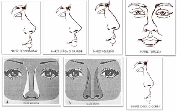Existen 14 tipos de nariz: descubre cuál es la tuya - Taringa!