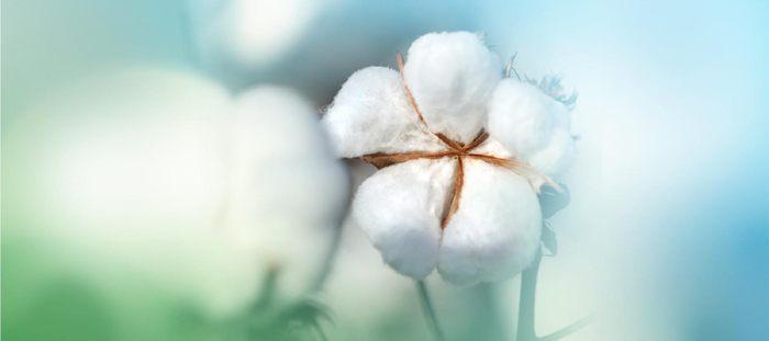 utiliza ropa interior de algodon